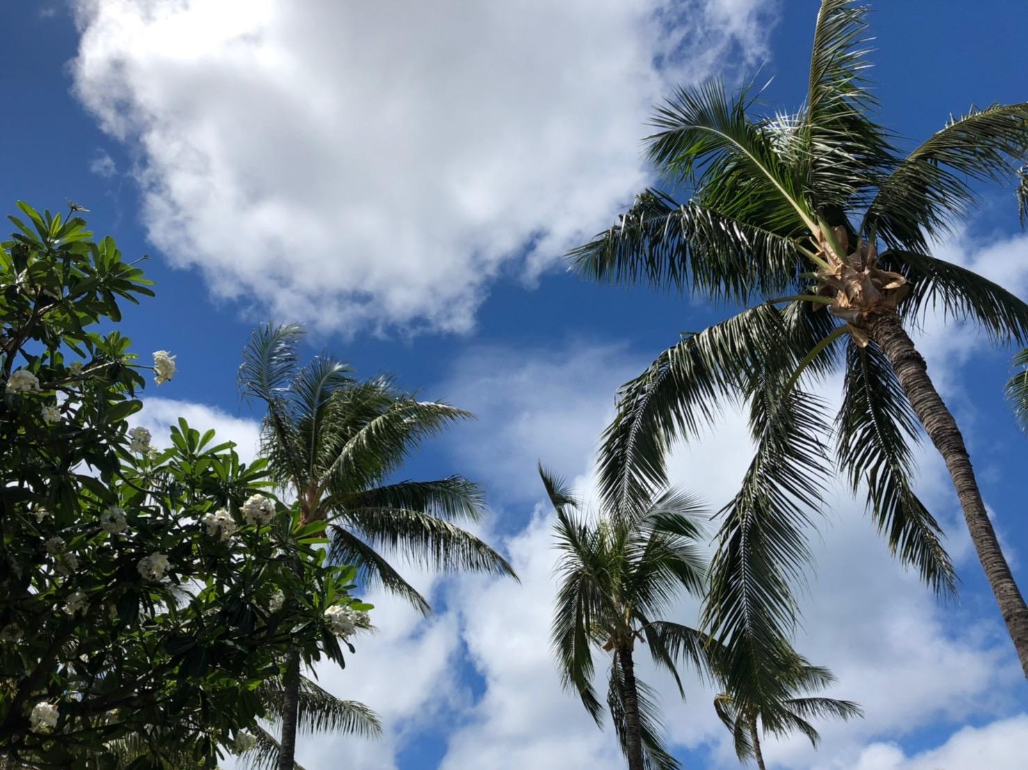 ハワイより愛をこめて