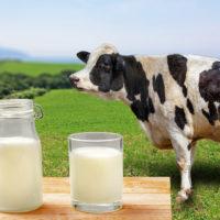 【独断おススメ食品紹介】おなかにやさしい乳飲料